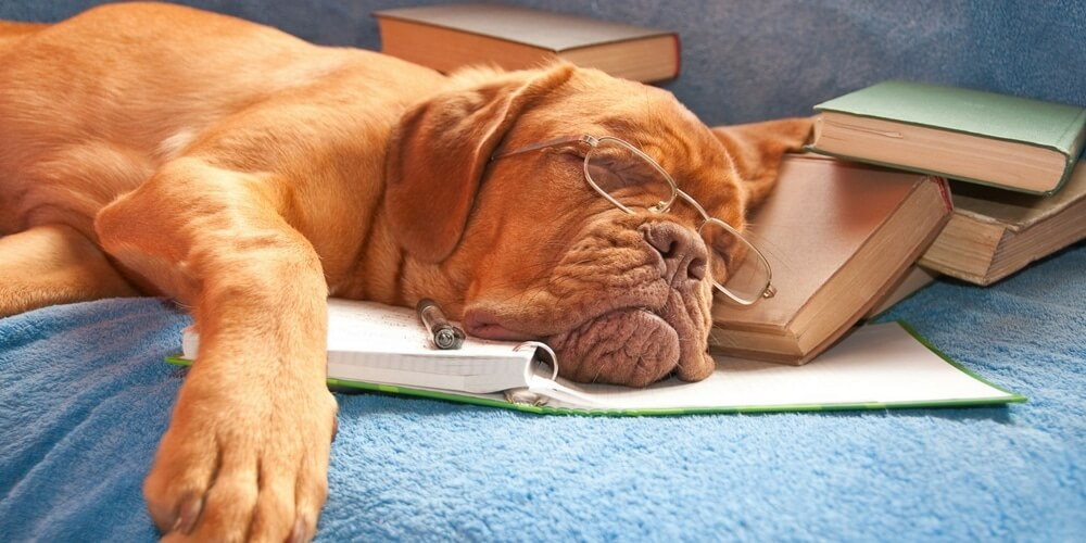 Dog with a glasses sleeping