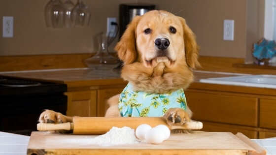 Dog With apron baking