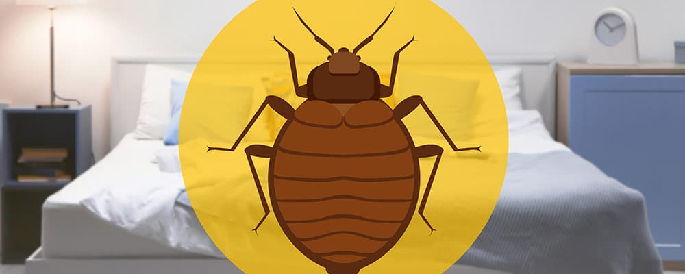 Bed bugs in a mattress voids the mattress