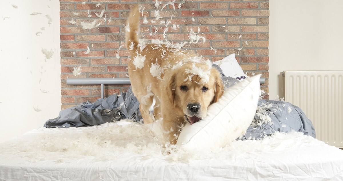 Should You Let Dog Sleep On Your Bed
